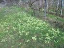 Zsibavirág szőnyeg